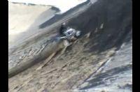Video de Gas Gas Wild